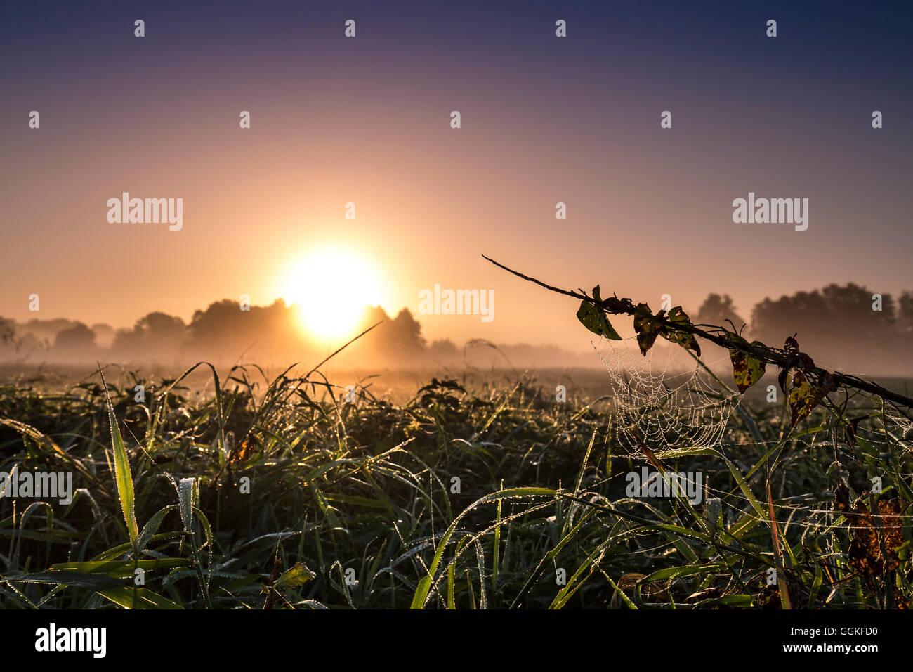 Sonnenaufgang in der Nähe von Worpswede, Teufelsmoor, Niedersachsen, Deutschland Stockbild