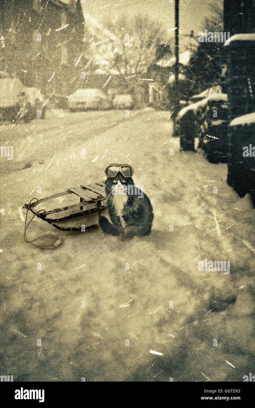 Katze tragen Brillen mit einem Schlitten auf der Straße sitzen, während ein winterlich verschneiten Tag Stockbild