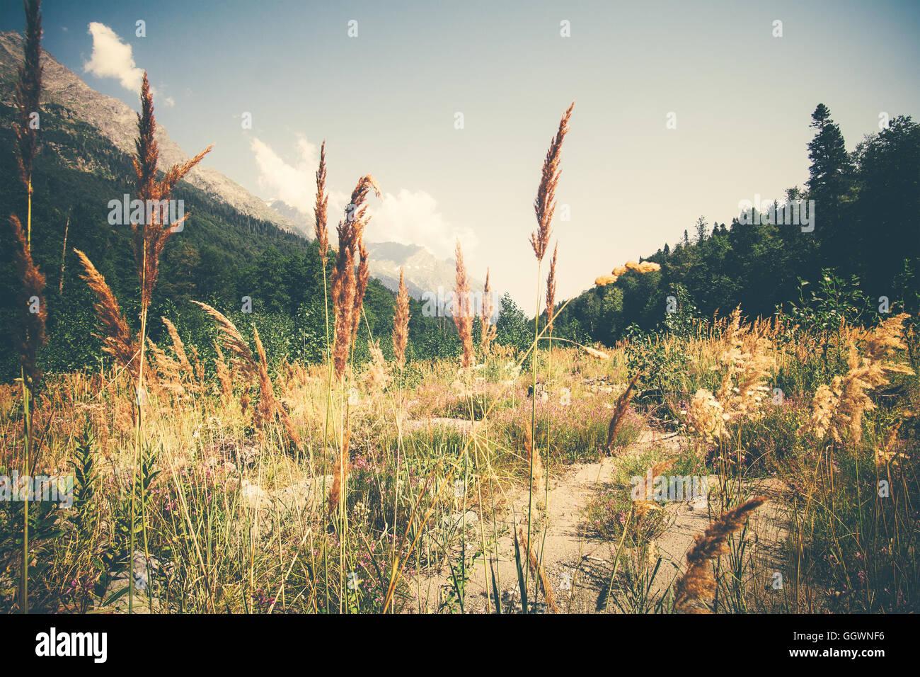 Sommerlandschaft Tal und Wald im ruhigen Panoramablick Berge Stockbild