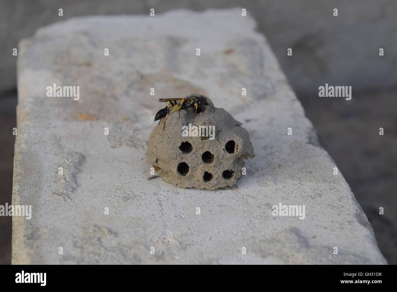 brechen sie ein wespennest aus ton nester der ton zugeh rigkeit wespe lehm kamera in das nest. Black Bedroom Furniture Sets. Home Design Ideas