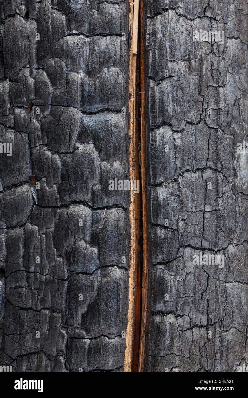 Gespaltener Baum Stockfotos Amp Gespaltener Baum Bilder Alamy