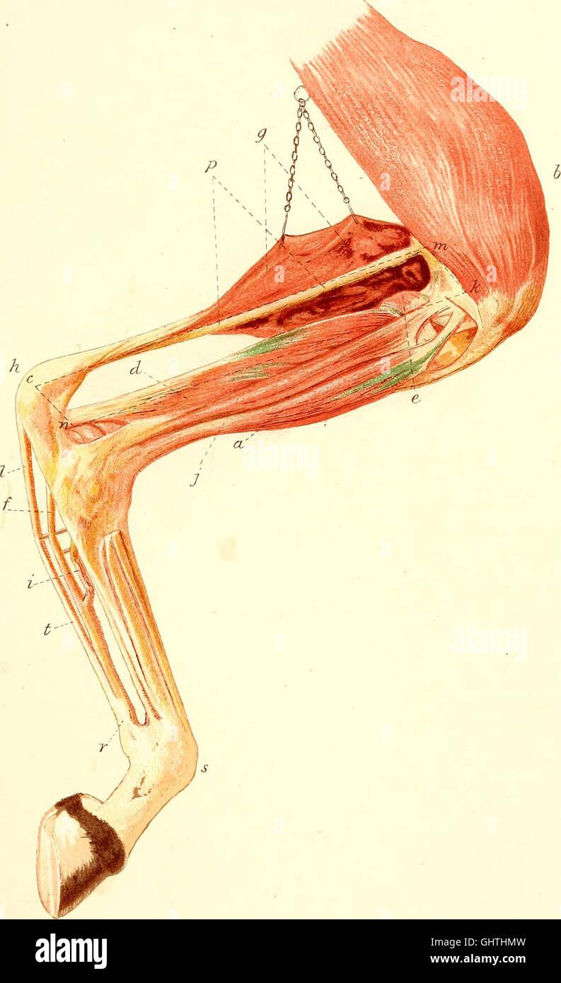 Erfreut Bewegung In Der Anatomie Fotos - Anatomie Ideen - finotti.info