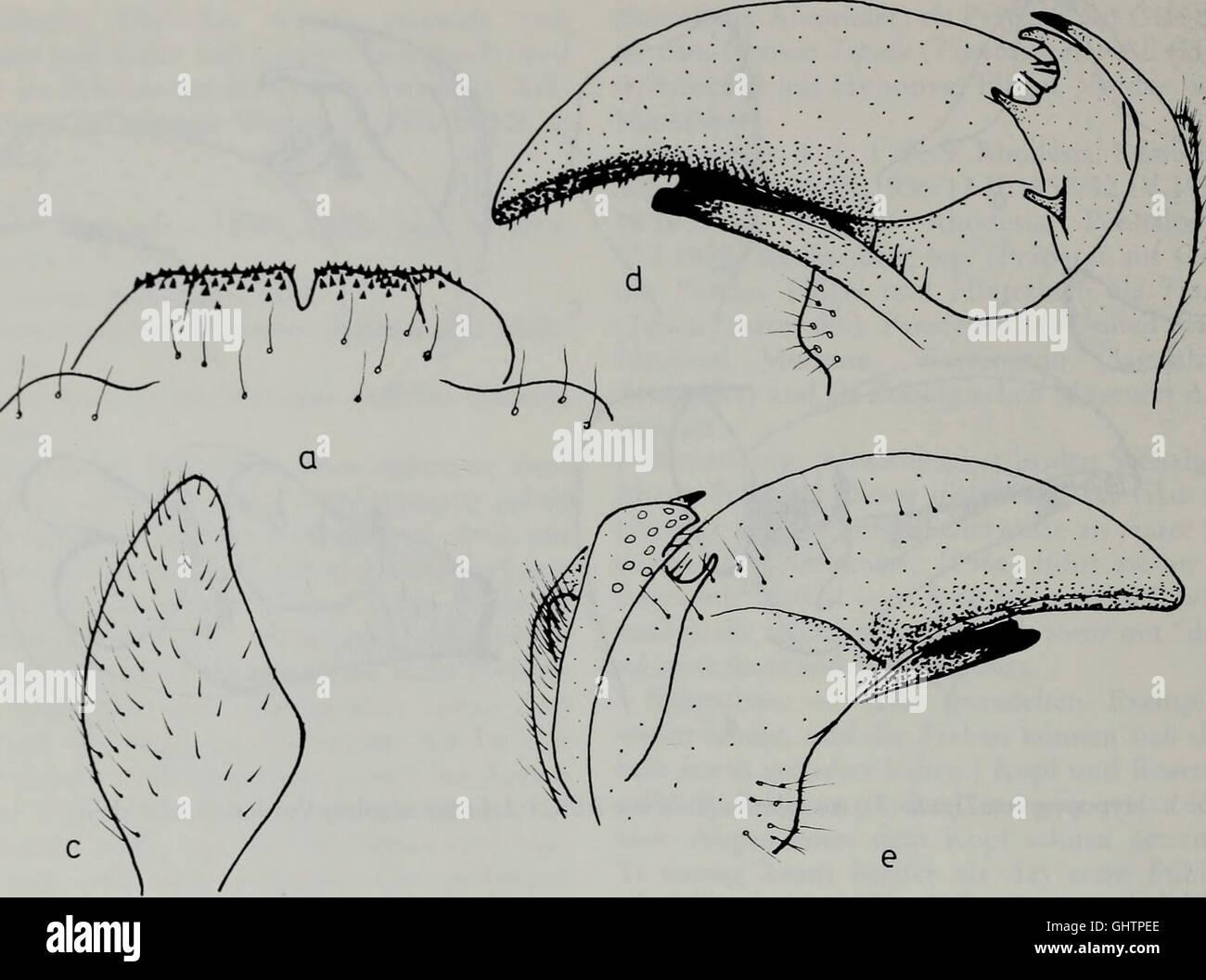 Tijdschrift Voor Entomologie (1984) Stockbild