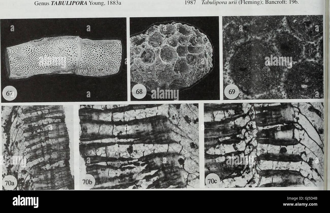 Bulletin of the Natural Histort Museum. Geologie-Serie (1996) Stockfoto