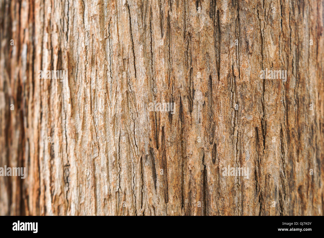 Teakbaum rinde  Teak-Baum Rinde Textur Stockfoto, Bild: 114494603 - Alamy