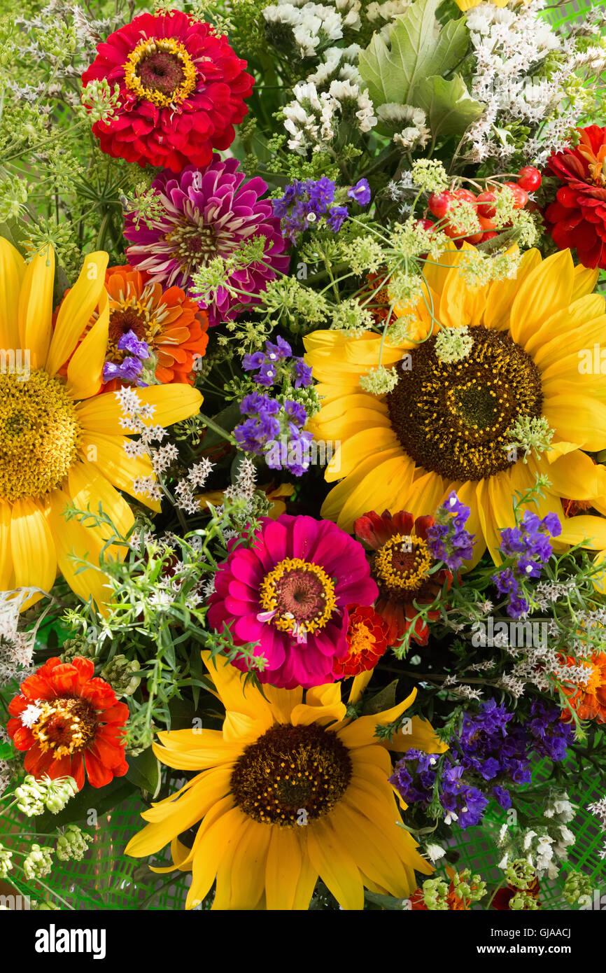 Nahaufnahme von bunten Blumen. Stockbild