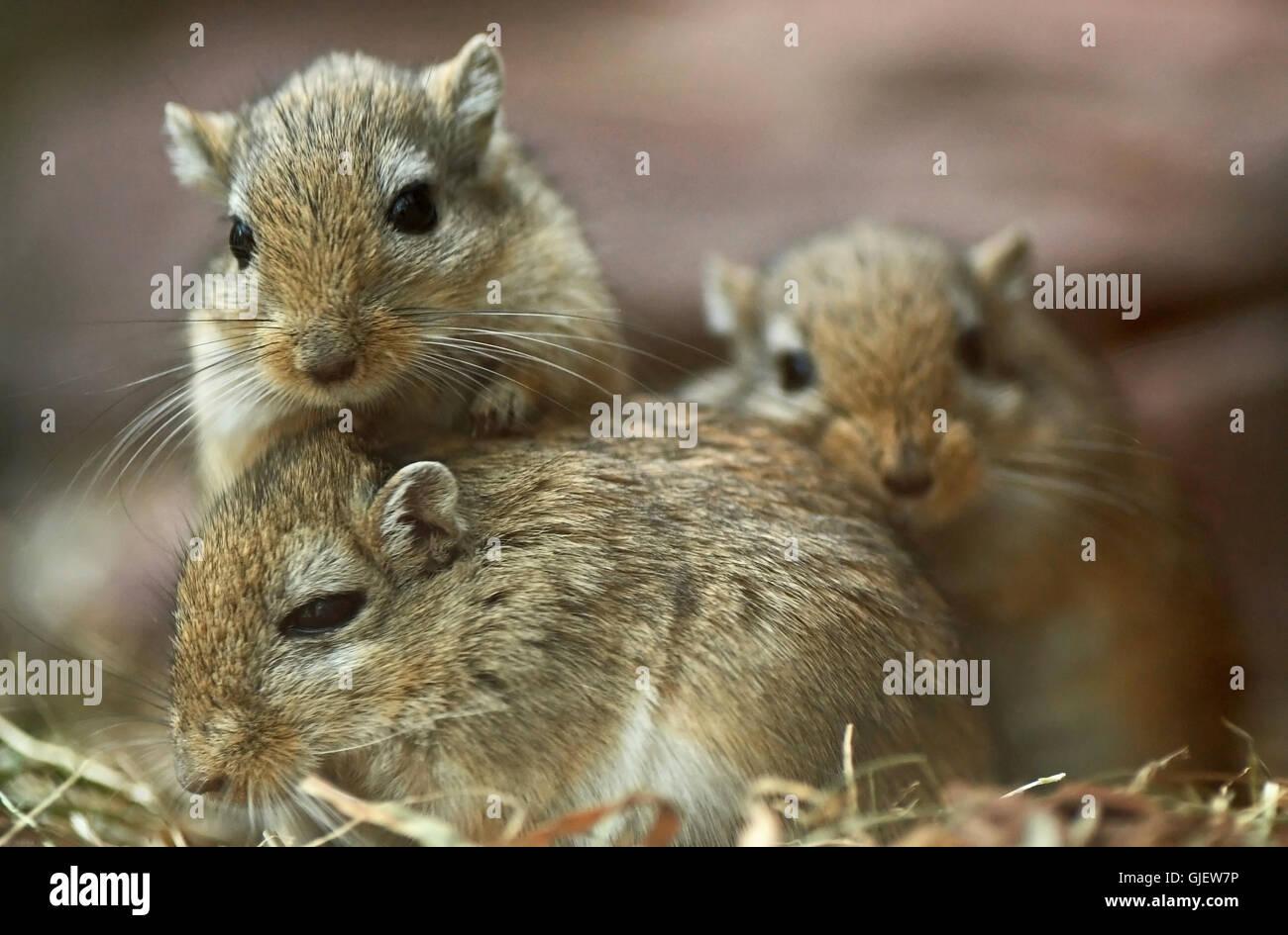 arme kleine Maus (2) Stockbild
