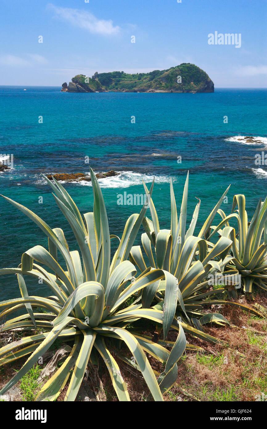 Küstenvegetation mit Inselchen im Hintergrund an einem sonnigen Tag. Süd Küste von Sao Miguel Island, Stockbild