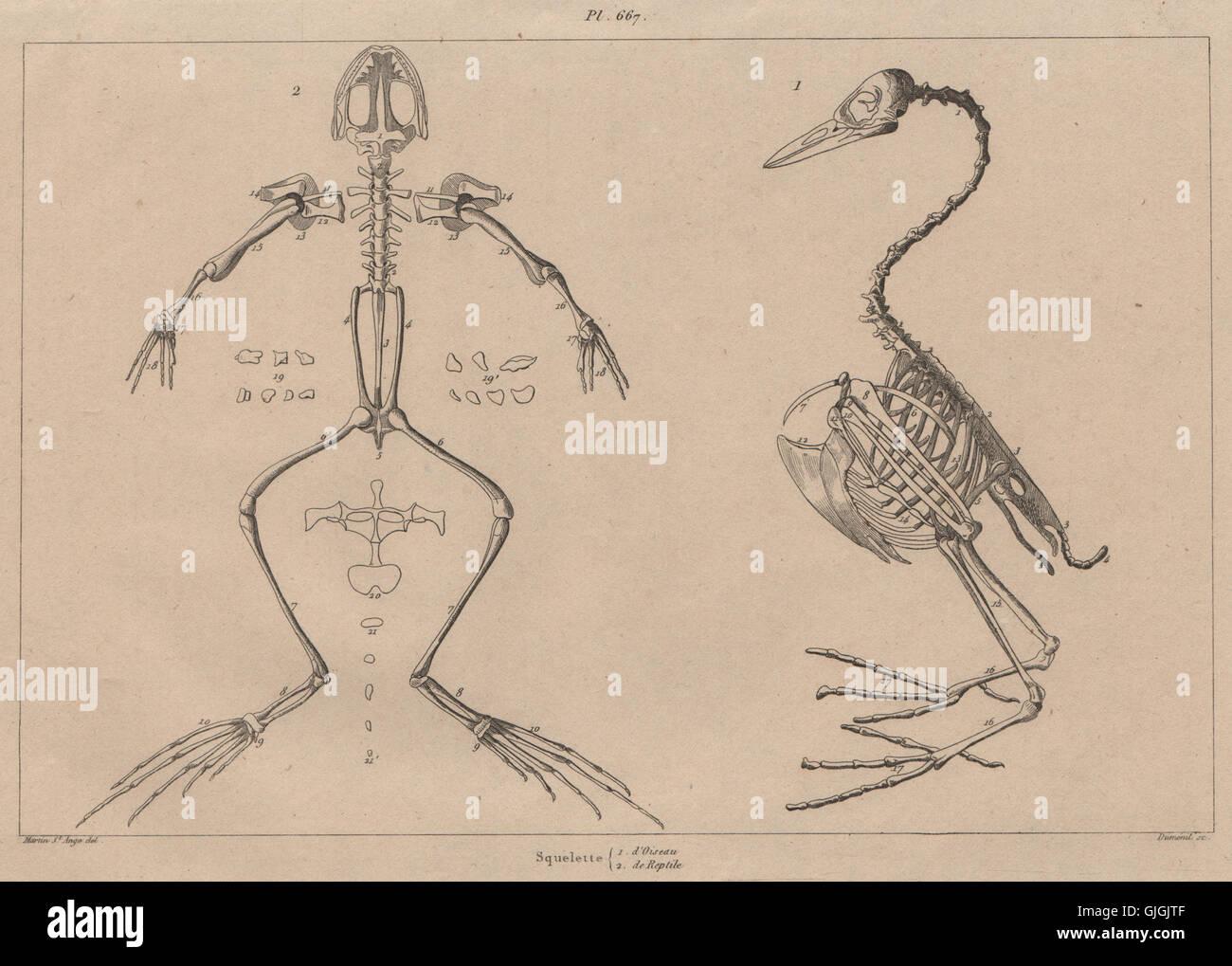 Berühmt Anatomie Skelett Spiele Ideen - Menschliche Anatomie Bilder ...
