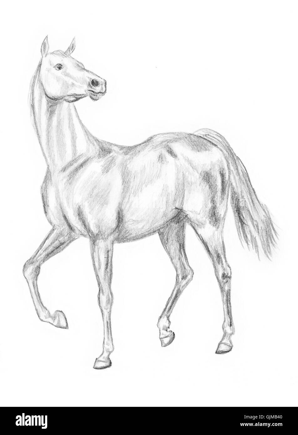 Walking Pferd Zeichnen Stockfoto Bild 114773792 Alamy