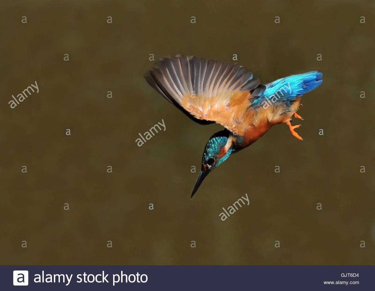Tiere Vogel Tiere Stockbild