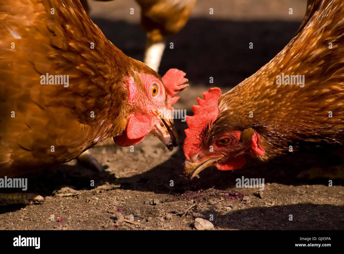Vogel-Tiere-Vögel Stockbild