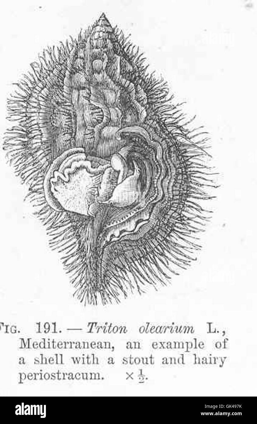 Fein Periost Galerie - Anatomie Und Physiologie Knochen Bilder ...
