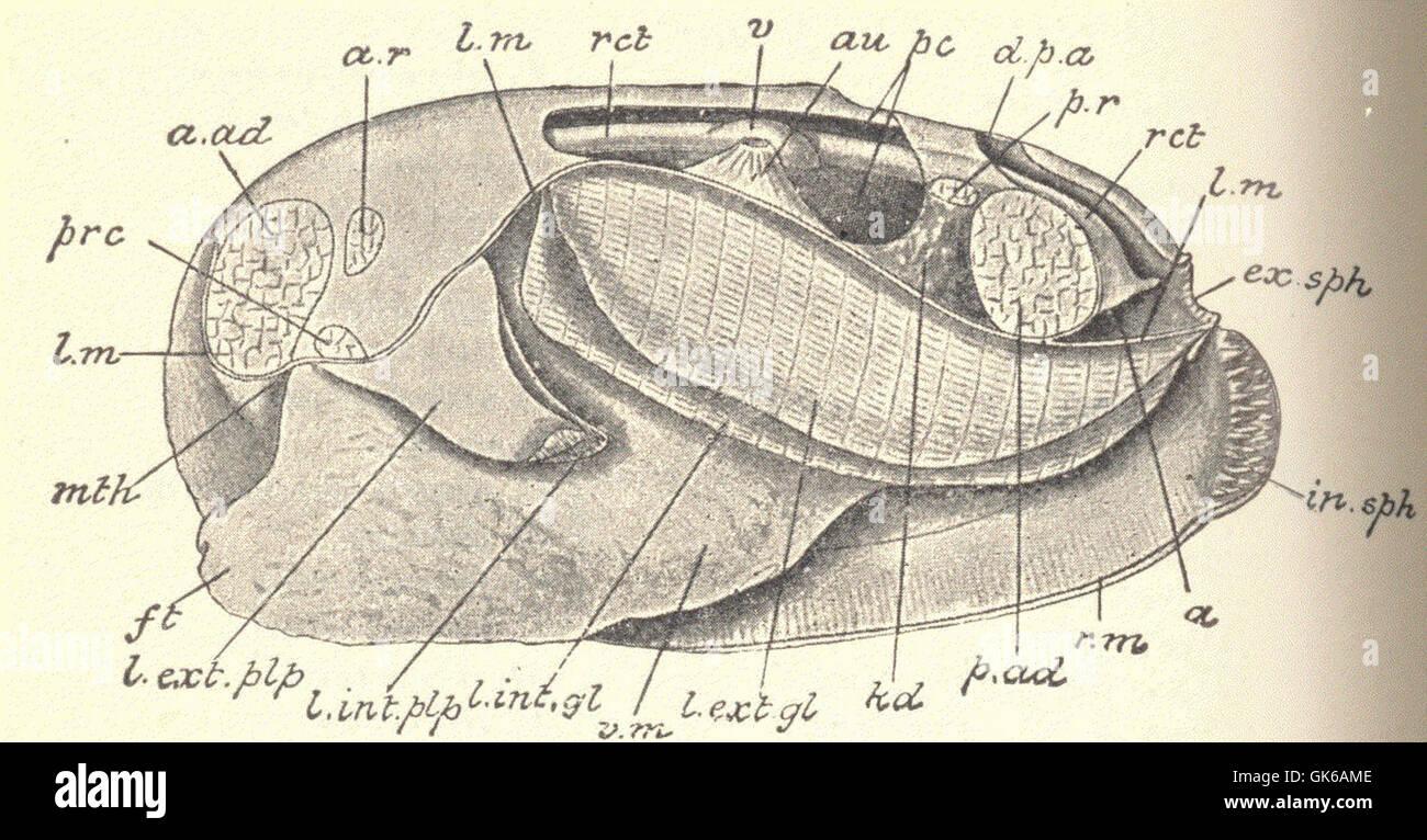 Gemütlich Schafe Herz Dissektion Labor Anatomie Und Physiologie ...