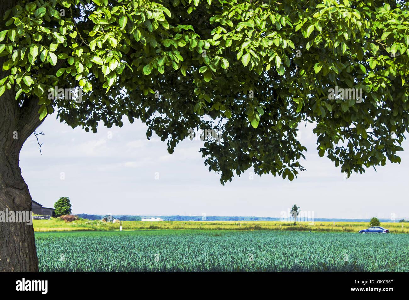 grüne Blätter Stockbild