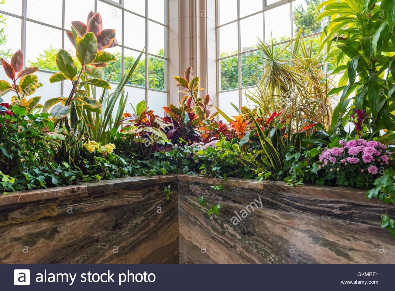 house plants conservatory stockfotos house plants