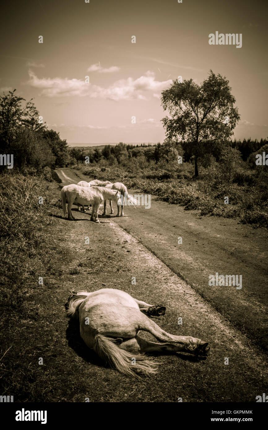 Ein Pferd, leiden Hitzschlag. Stockbild