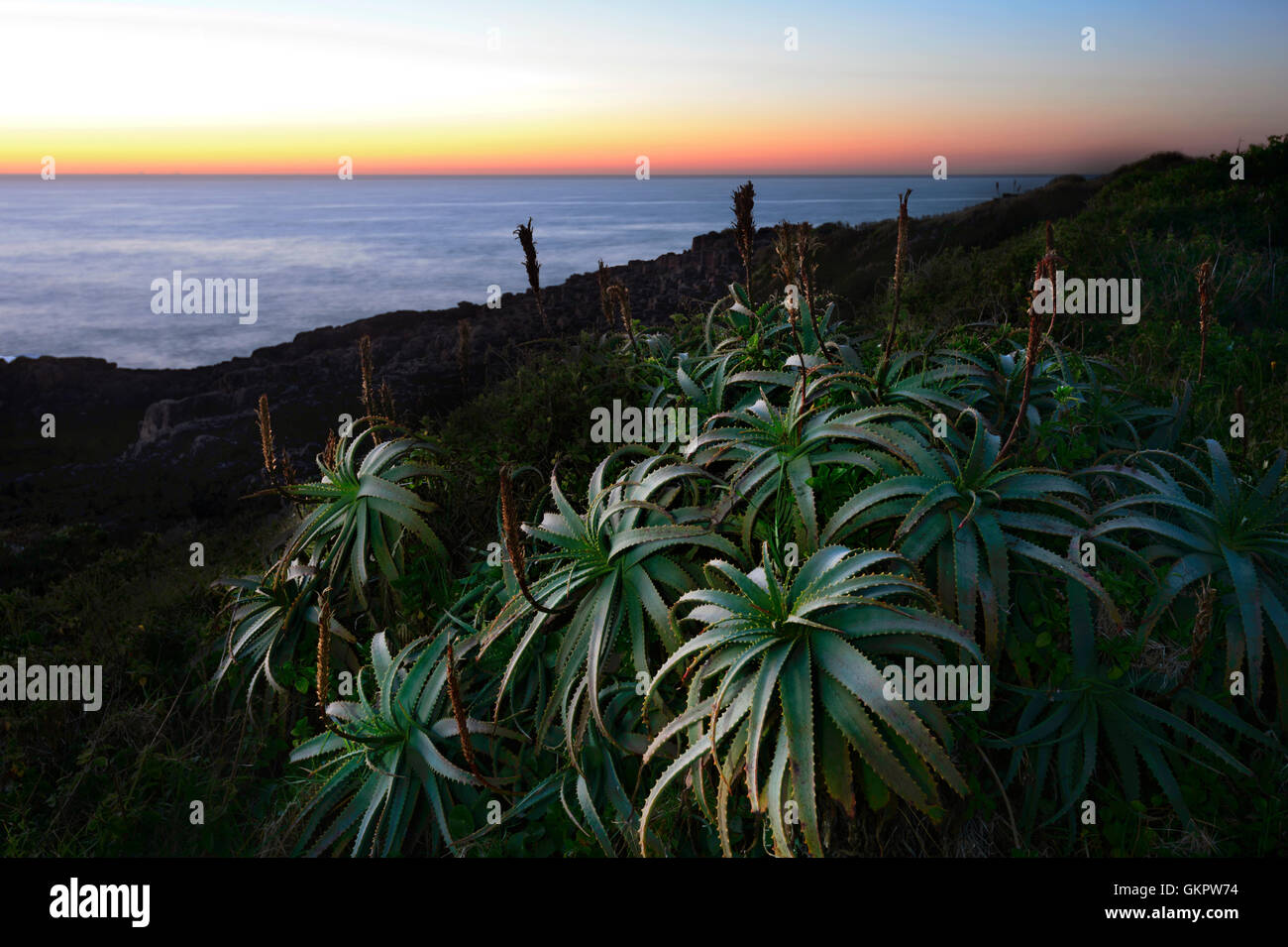 Ethereal Sonnenaufgang über dem Illawarra Küste, New South Wales, NSW, Australien Stockbild