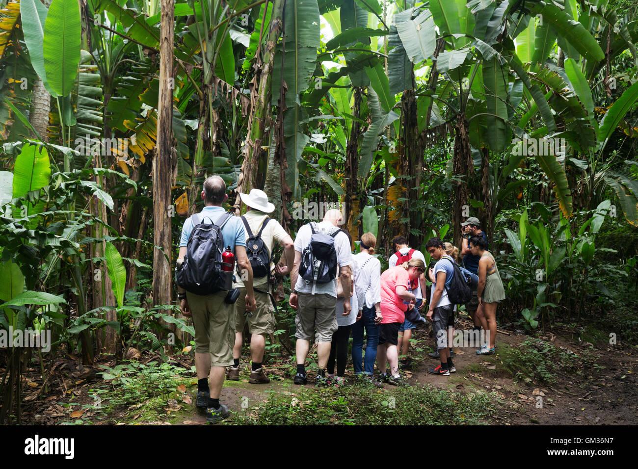 Touristen auf eine geführte Tour in der Costa Rica Regenwald, Parque Carara (Carara Nationalpark), Costa Rica, Stockbild