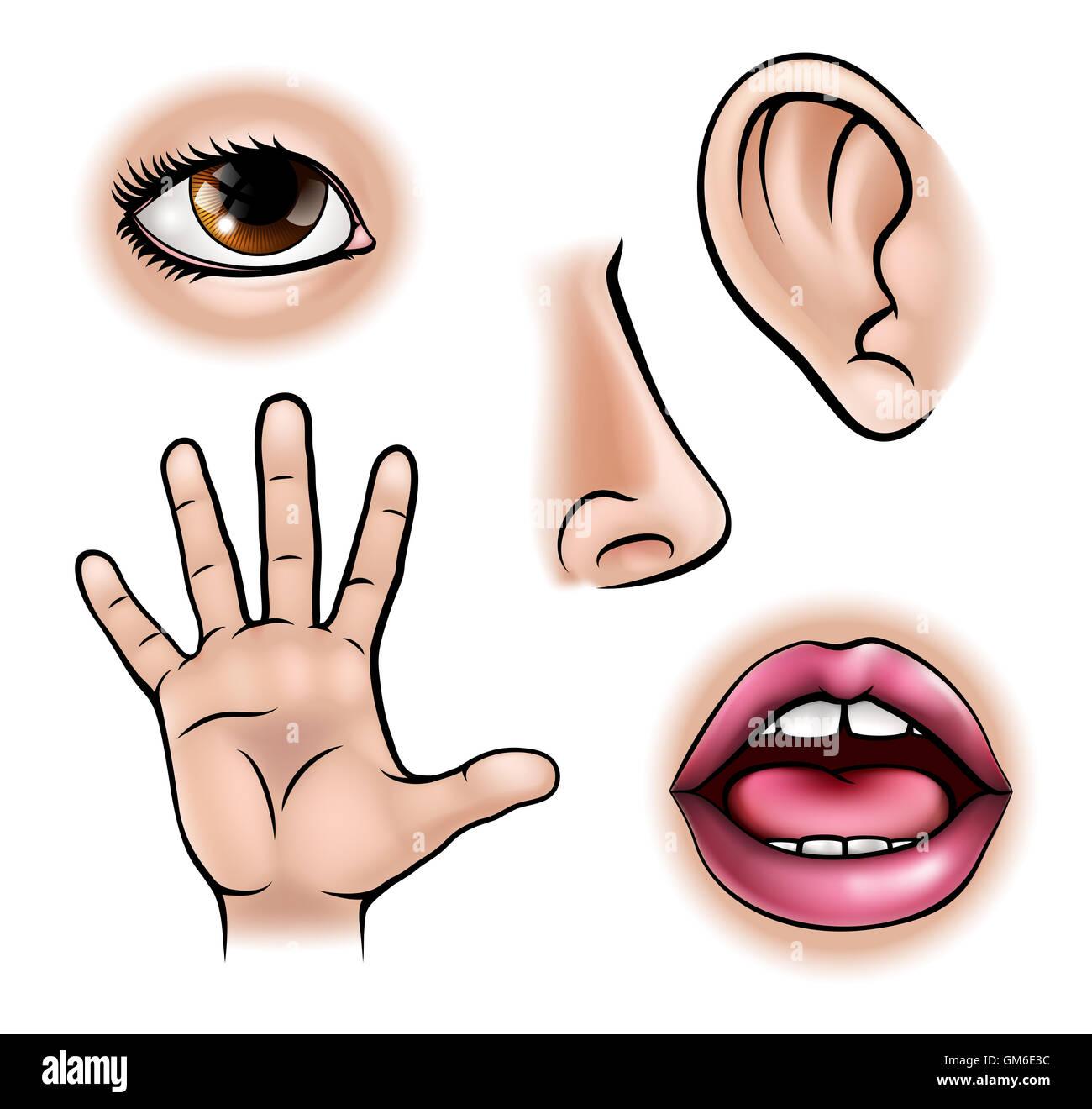 Eine Wissenschaft Bildung Darstellung der Symbole für die fünf Sinne Stockfoto