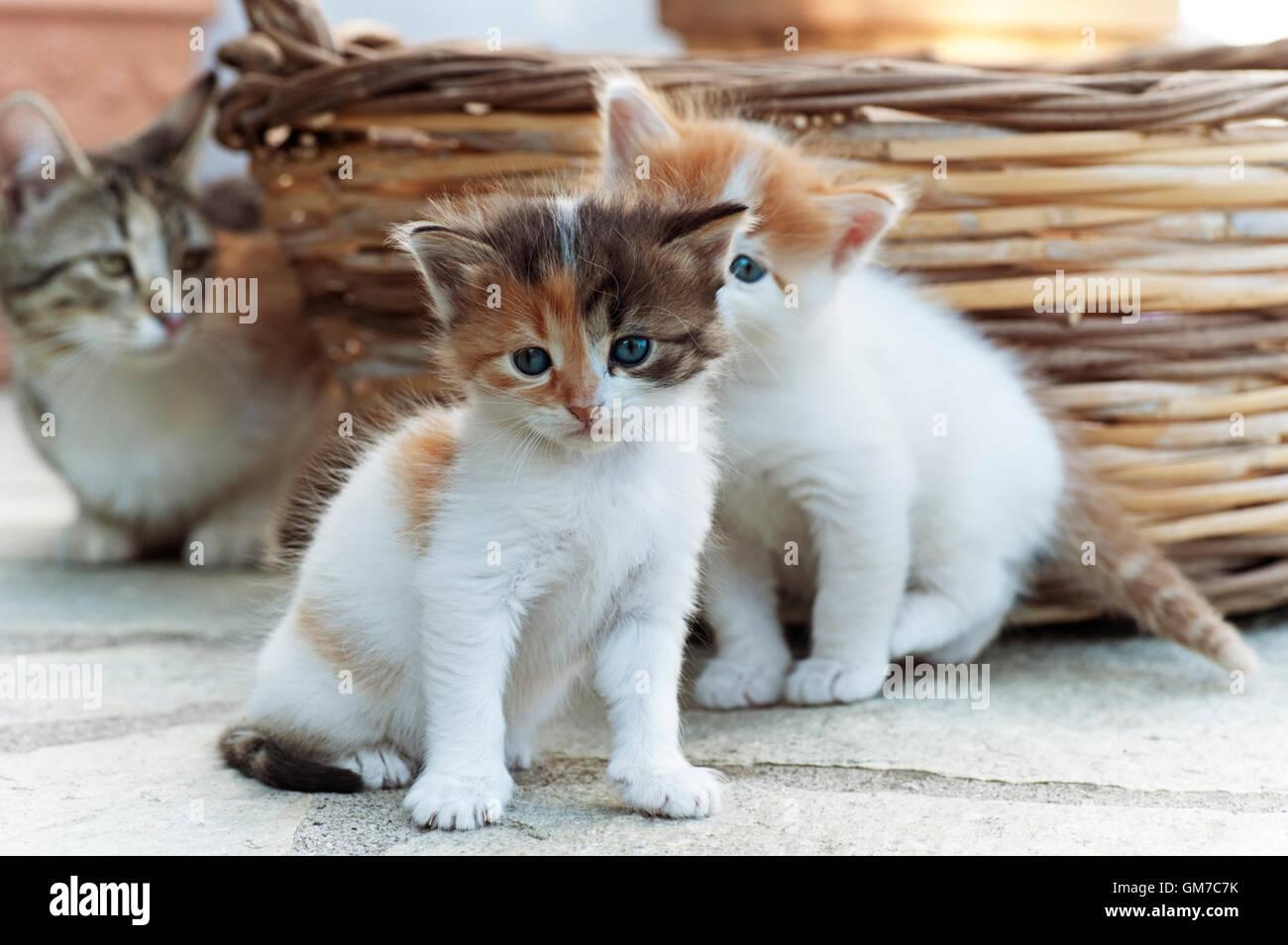 Zwei vier Wochen alte Kätzchen sitzen im Freien mit ihrer Mutter beobachtete sie im Hintergrund Stockbild