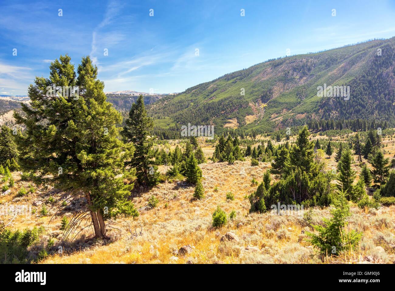 Landschaft von Hügeln und Wäldern im Yellowstone National Park Stockbild