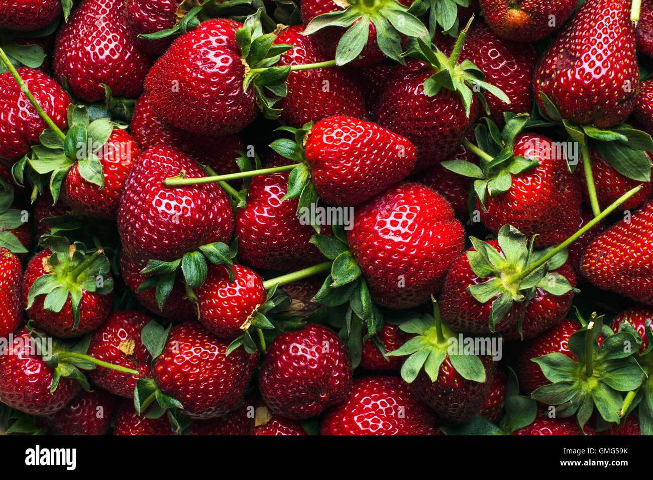Frisch geerntete reife Erdbeeren, Ansicht von oben Stockbild