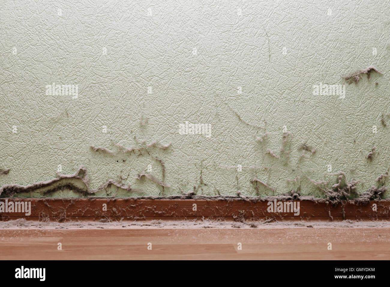 schmutzige zimmer mit staub auf wand und boden stockfoto bild 116158776 alamy. Black Bedroom Furniture Sets. Home Design Ideas