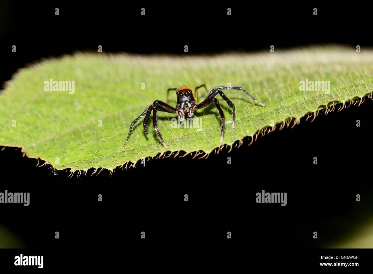 Wunderbar Spinnen Färbung Blatt Fotos - Beispiel Wiederaufnahme ...