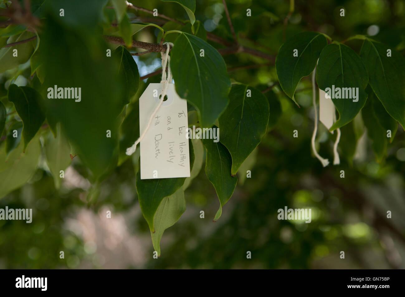 Tag mit Meldung auf Yoko Ono wünschen Baum - USA Stockbild
