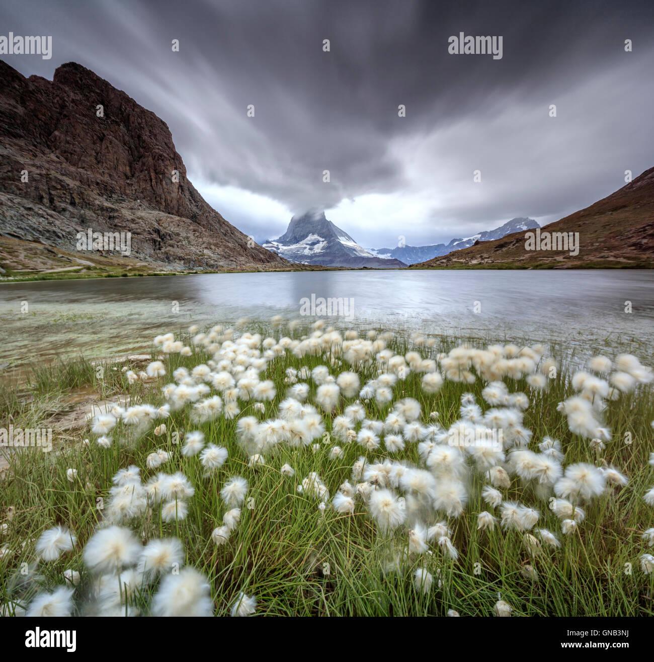 Wollgras am See Riffelsee während ein Gewitters Matterhorn Zermatt Kanton Wallis Schweiz europäischen Stockbild