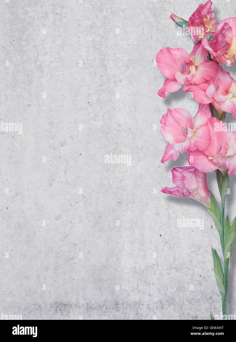 Rosa Lilie auf einem Hintergrund von einer Betonwand, Textur, freien Platz. Stockfoto