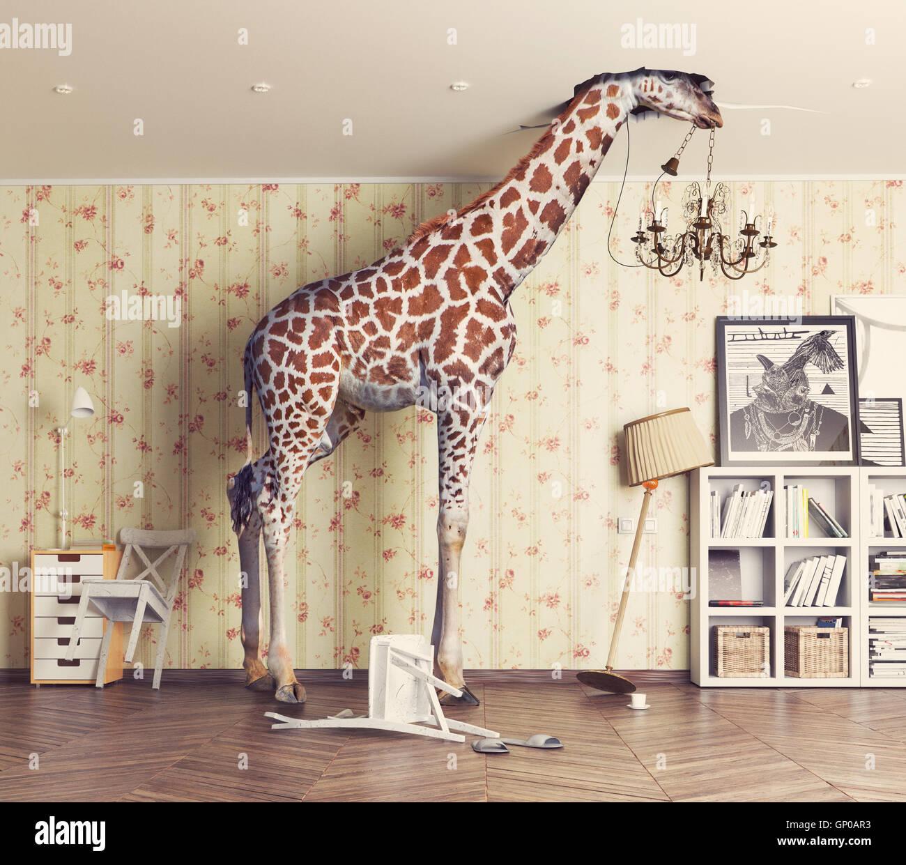Giraffe bricht die Decke im Wohnzimmer. Fotografie-Kombination-Konzept Stockbild
