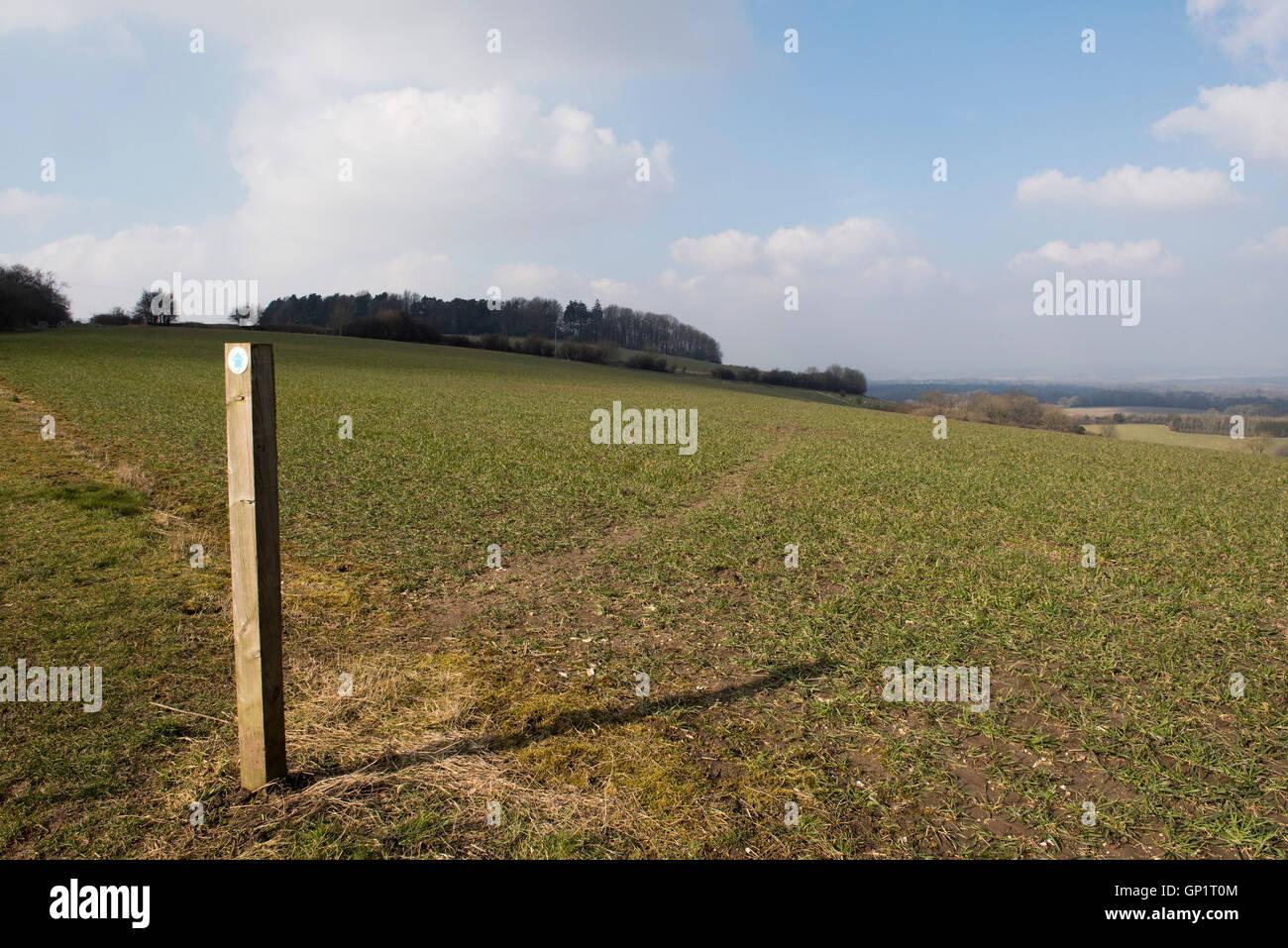Wanderweg-Zeichen und Weg durch Phasen von Feldinhalten Winterweizen auf den Norden Wessex Downs im März Stockfoto