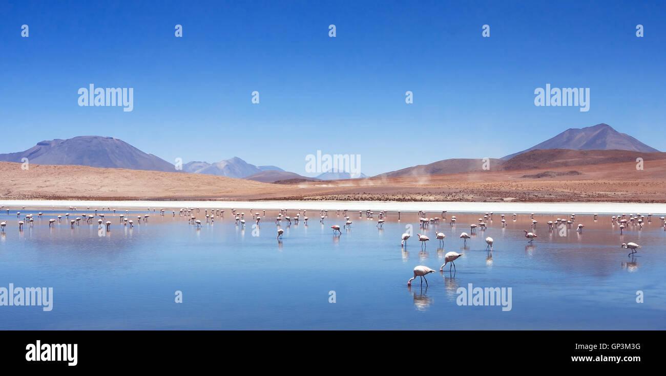 Rosa Flamingos in Bolivien, Natur und Tierwelt, schöne Landschaft mit Bergsee und Vögel Stockbild