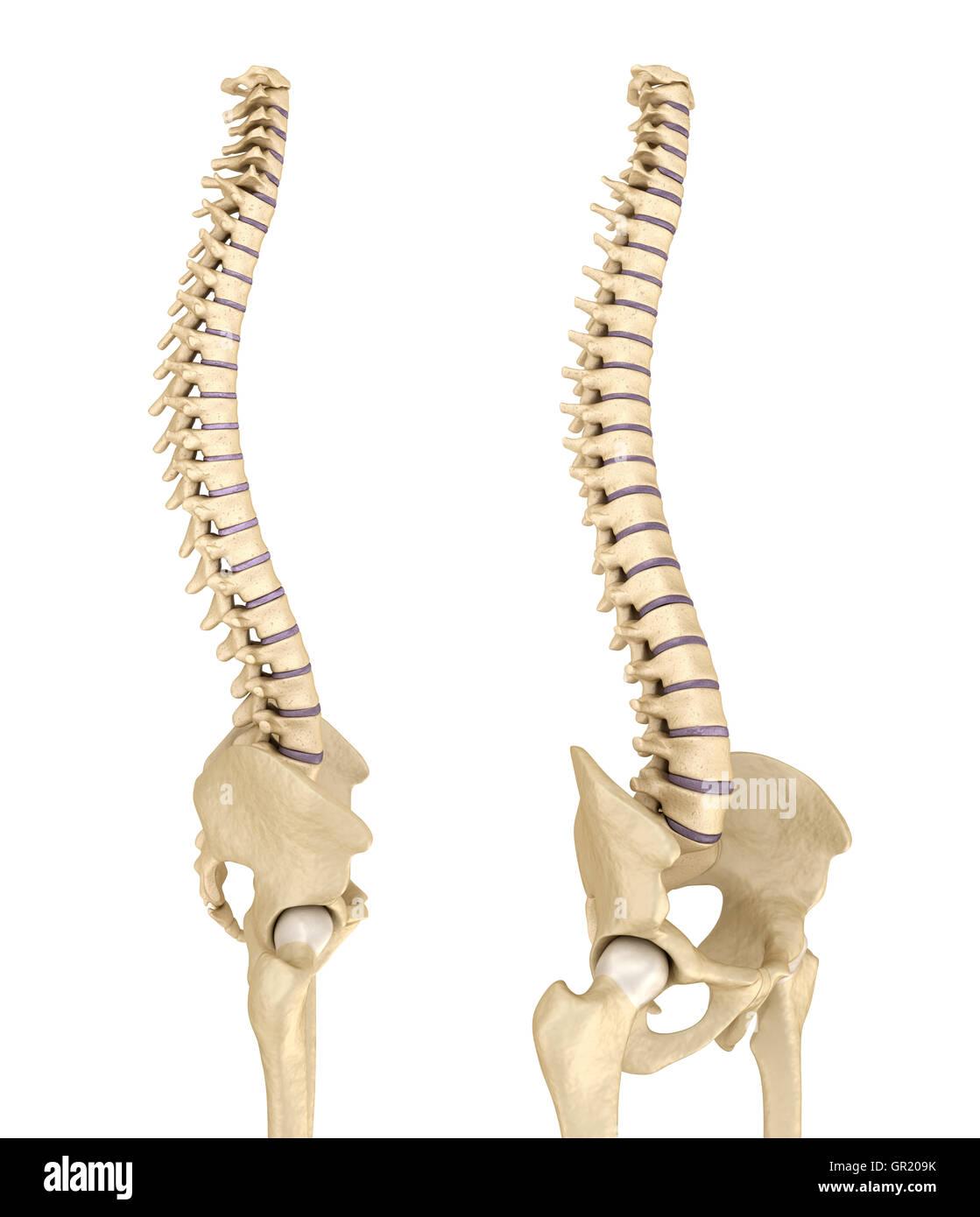 Wunderbar Beckenanatomie Abbildungen Ideen - Anatomie Ideen ...