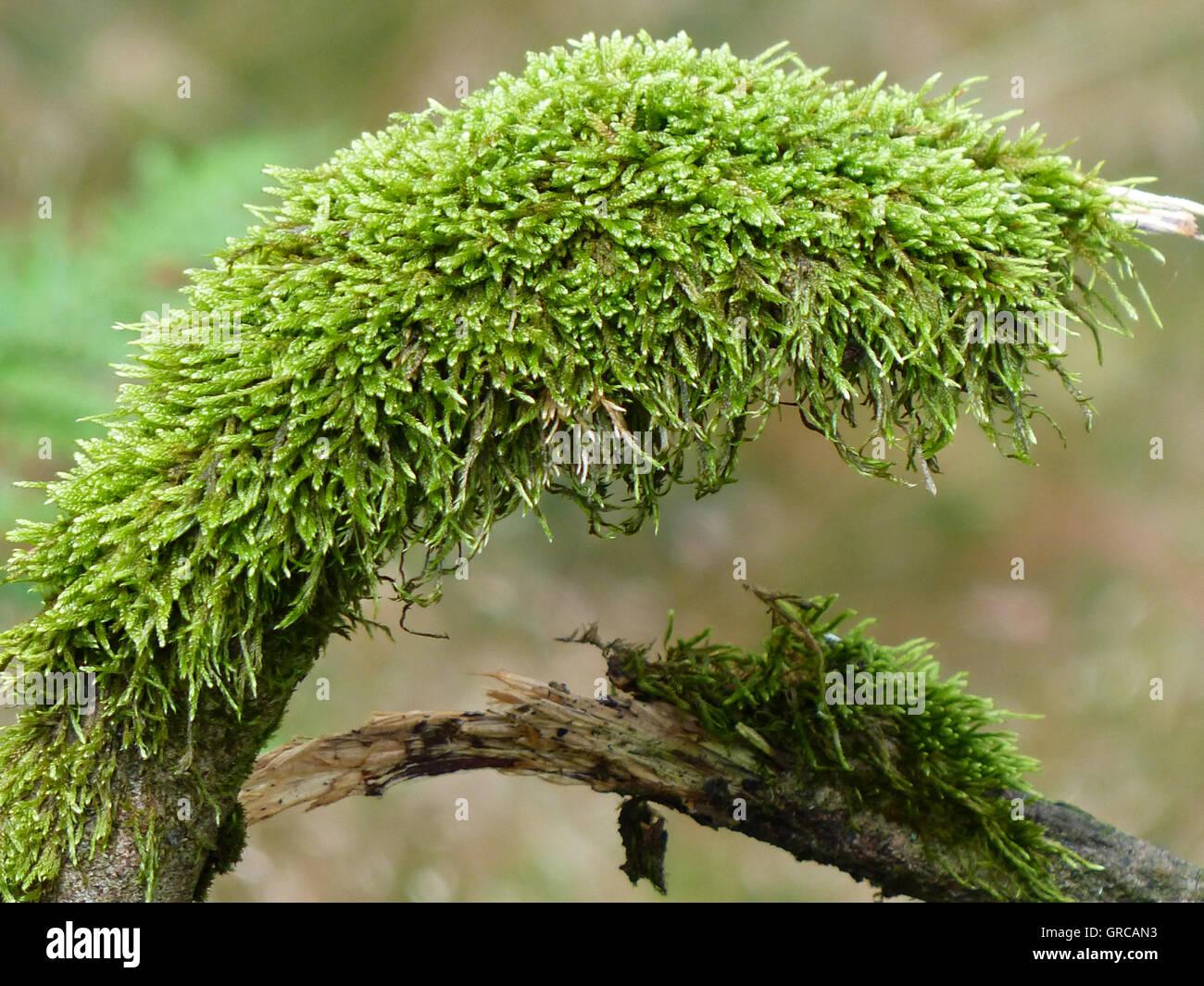Bizarre Moss Figur Stockbild