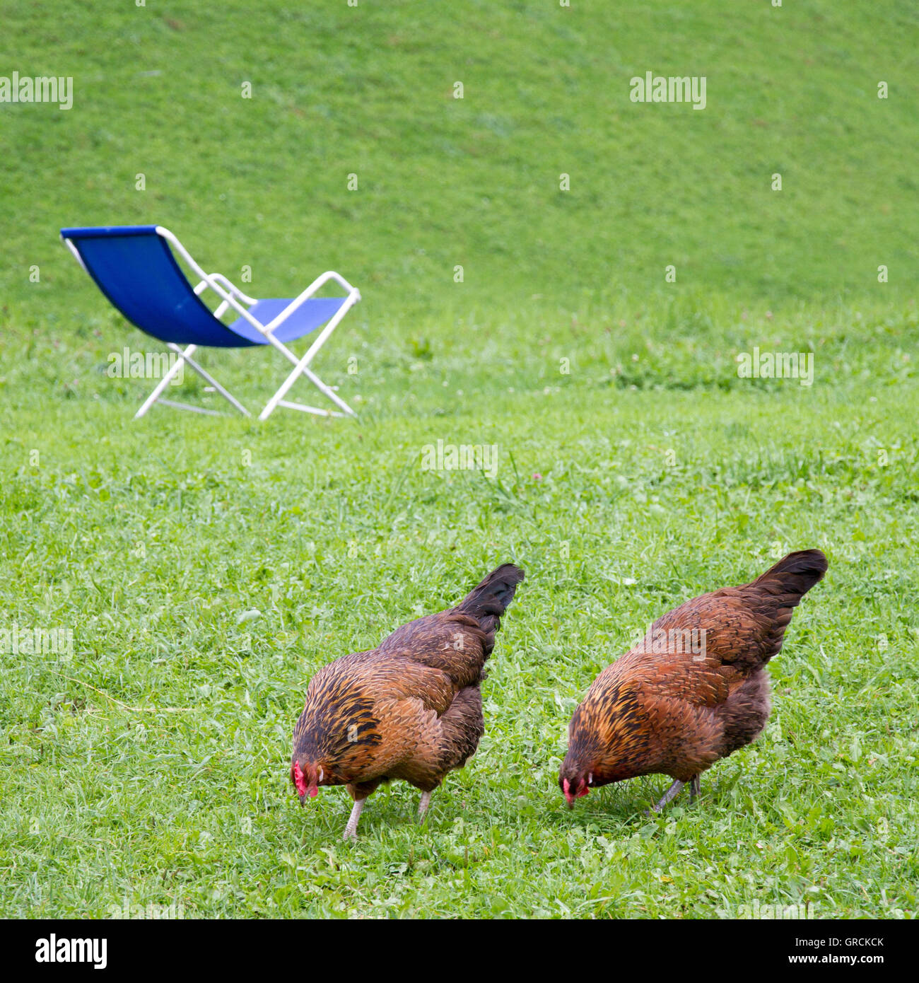 Chicken On Tour Stockfotos & Chicken On Tour Bilder - Alamy