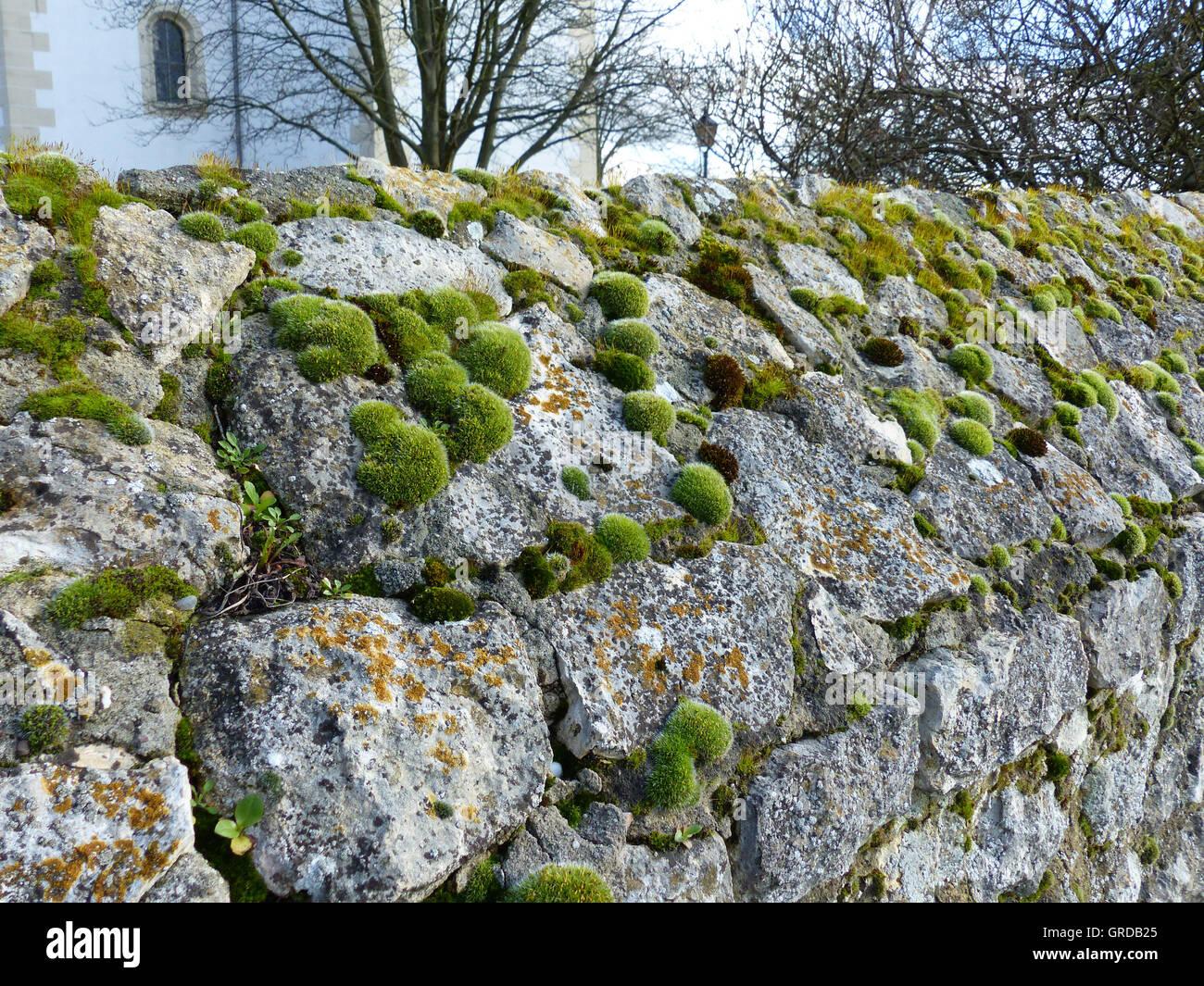 moss wall building stockfotos moss wall building bilder alamy. Black Bedroom Furniture Sets. Home Design Ideas