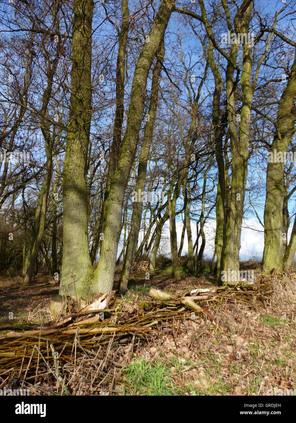 Fur Einen Zaun Eine Wand Gestapelt Aste Und Zweige Am Waldrand