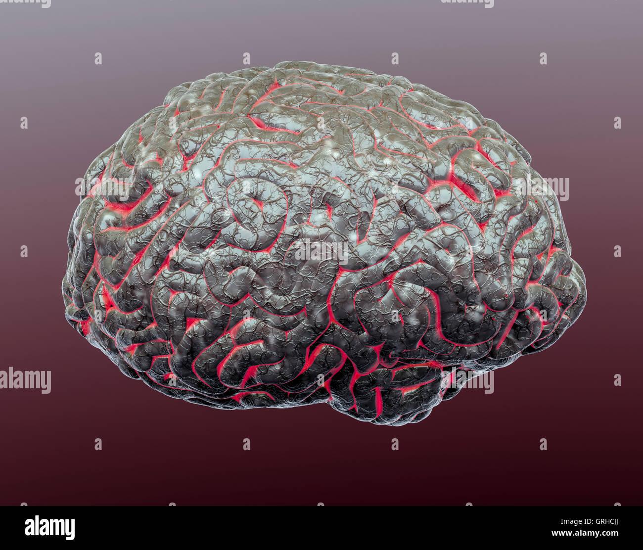 Tolle Die Anatomie Des Gehirns Und Seine Funktionen Galerie ...