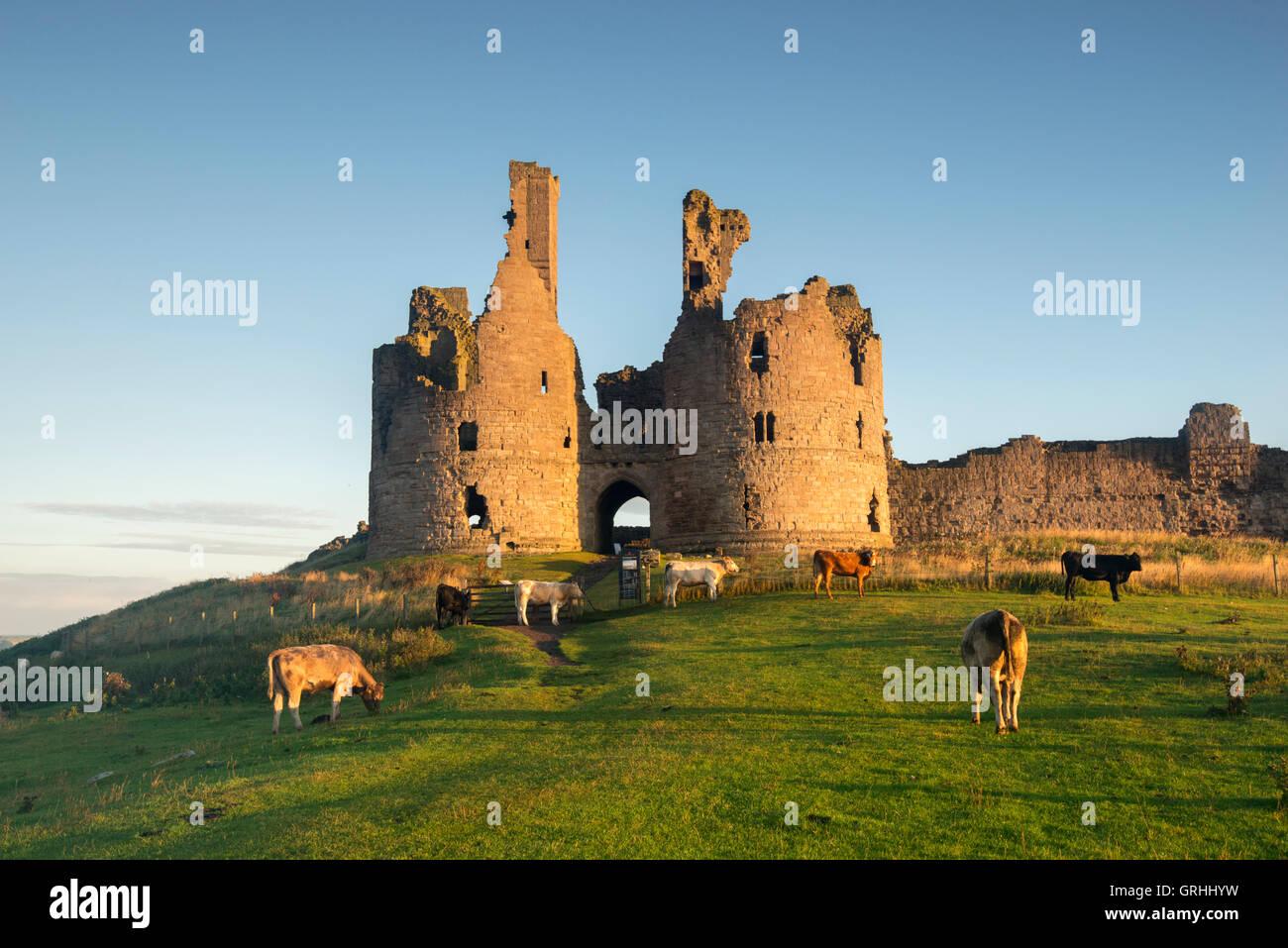 Am frühen Morgen von den Ruinen der Dunstanburgh Castle an der Küste von Northumberland, England UK Stockbild