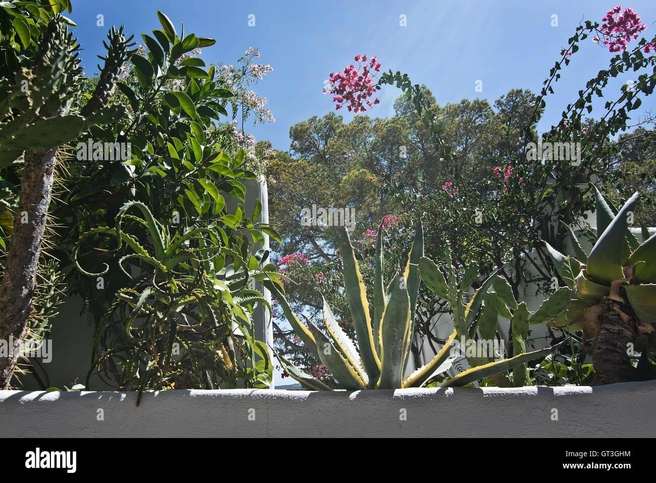 Pflanzen Im September weißen putz wand mit grünen subtropischen pflanzen gegen blauen