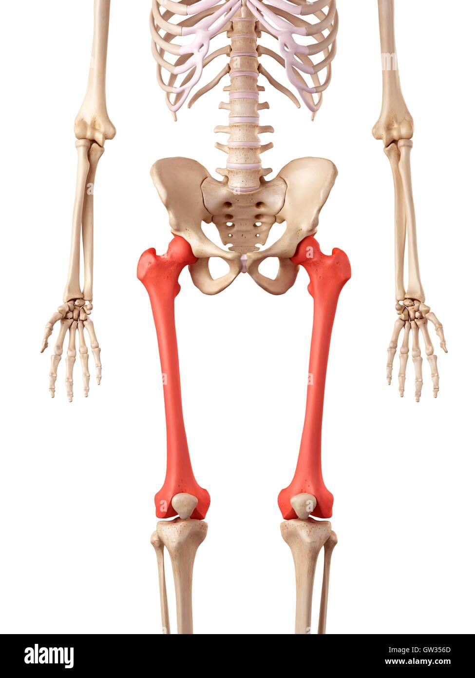 Charmant Menschliches Bein Knochen Diagramm Bilder - Anatomie Ideen ...