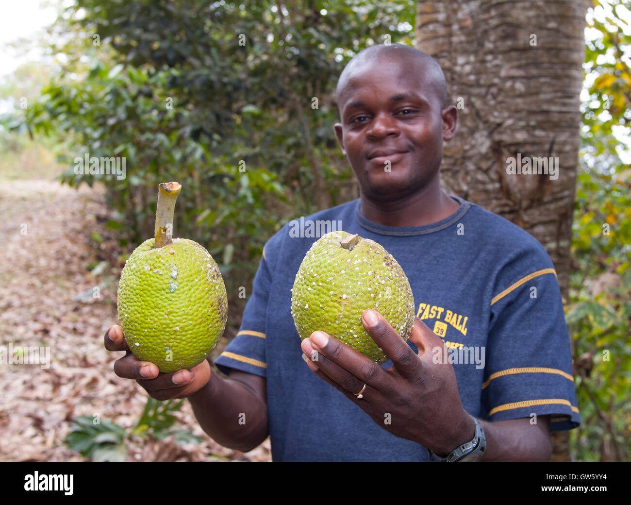 Brotfrucht, Artocarpus Altilis. Männer zeigen Früchte. São Tomé e Príncipe Stockbild