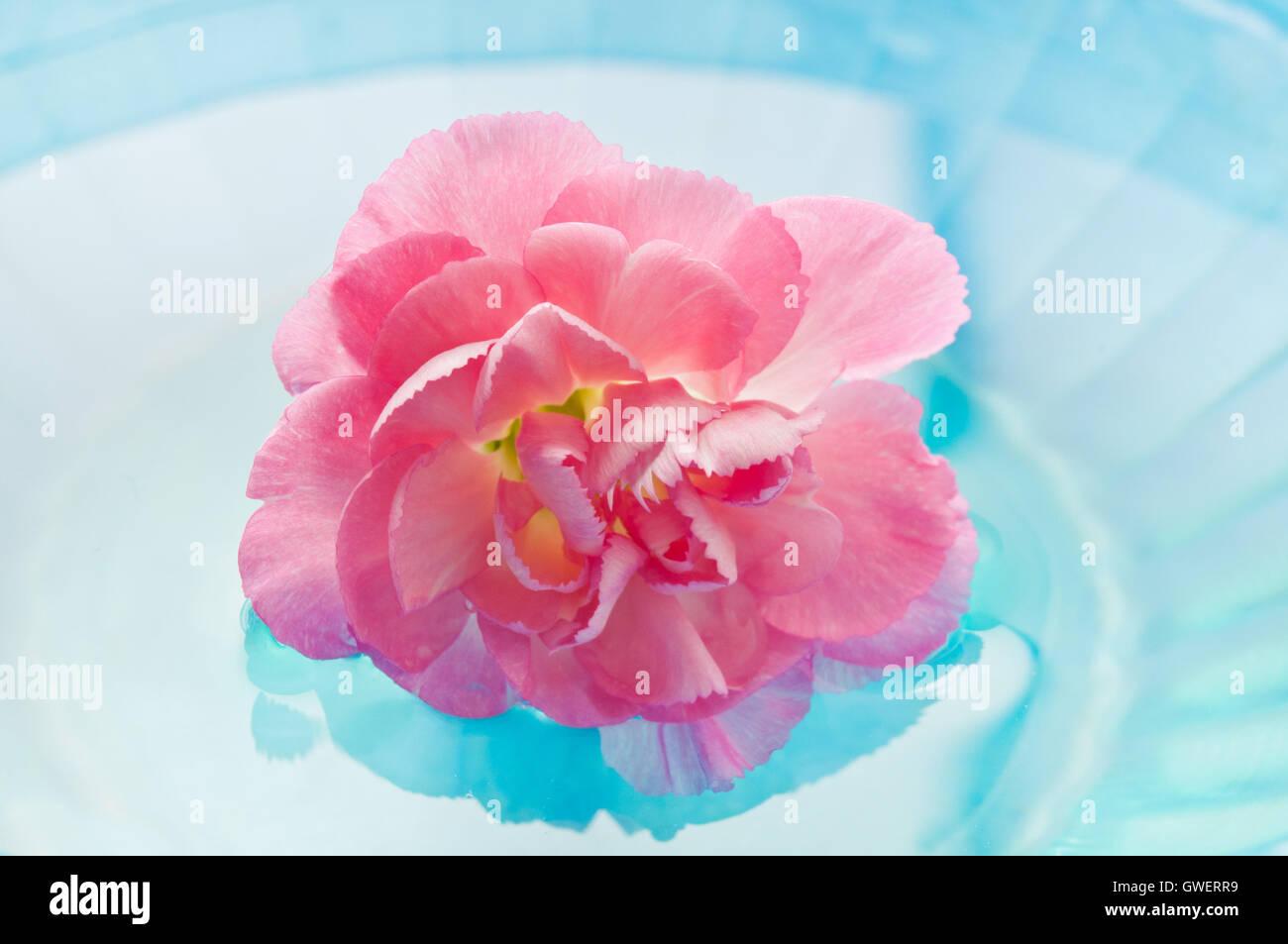 rosa Nelke Blume im Wasser, Meditation und Achtsamkeit Stockbild