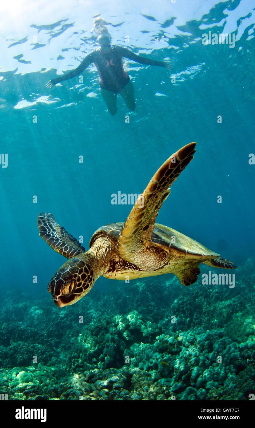 the sea turtles stockfotos the sea turtles bilder seite 16 alamy. Black Bedroom Furniture Sets. Home Design Ideas