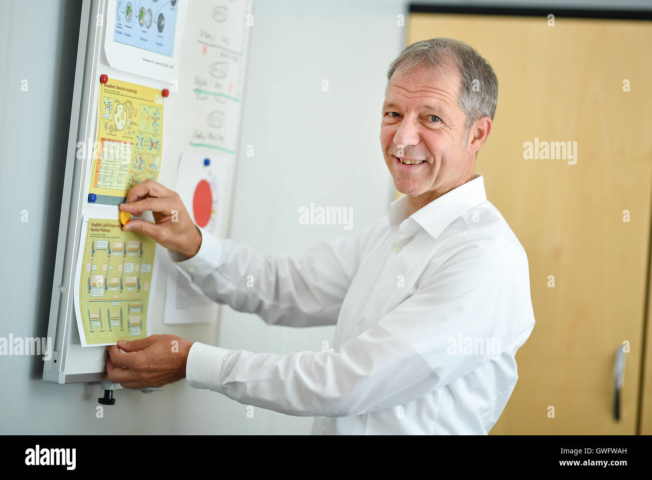 Heidelberg, Deutschland. 13. Sep, 2016. Virologe und Krebs-Forscher Ralf Bartenschlager in seinem Büro an der Stockbild