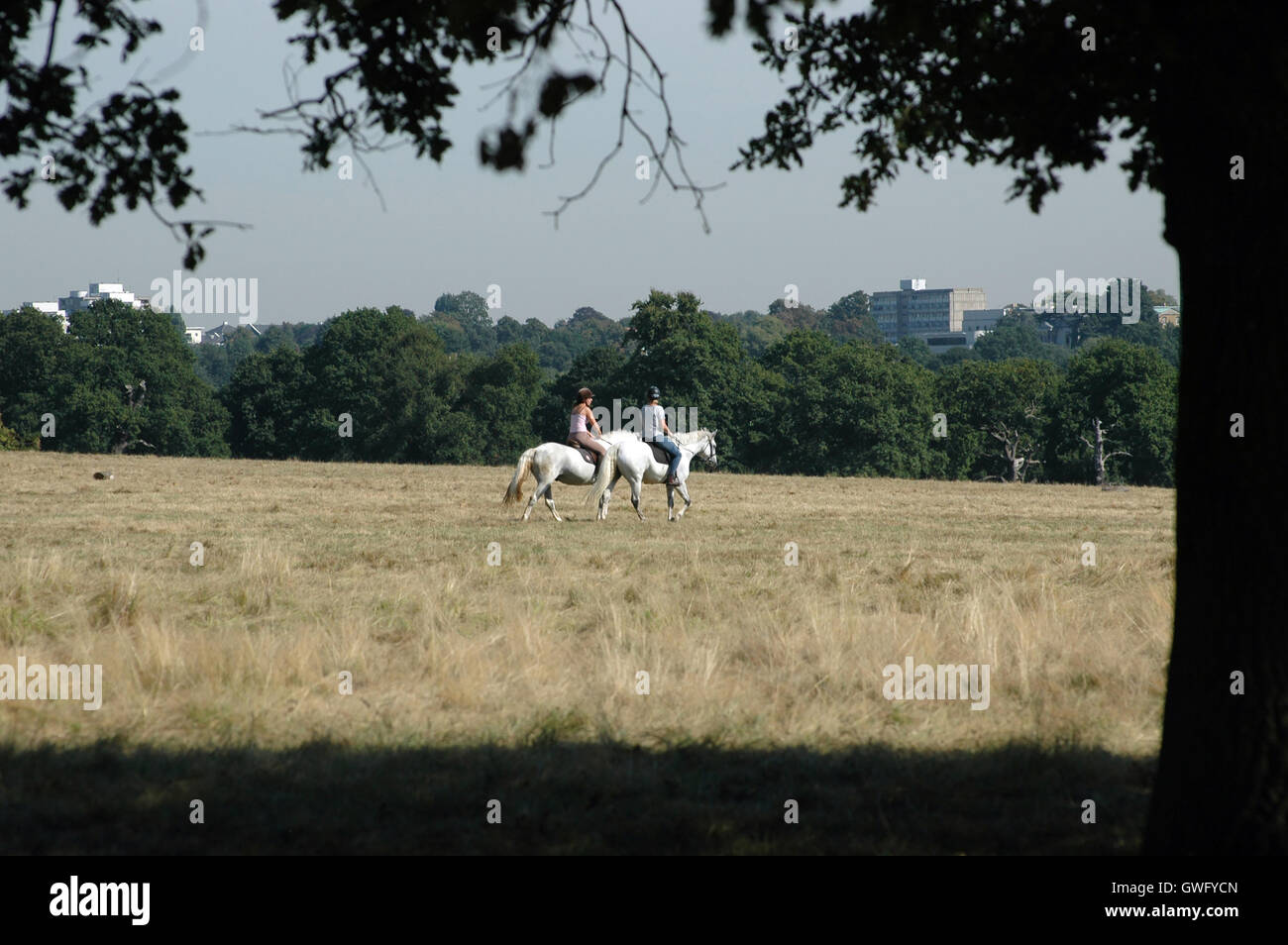 London, UK, 13. September 2016, Reiter im Richmond Park am heißesten Tag im September bei Celsius 32 Grad in London Stockfoto