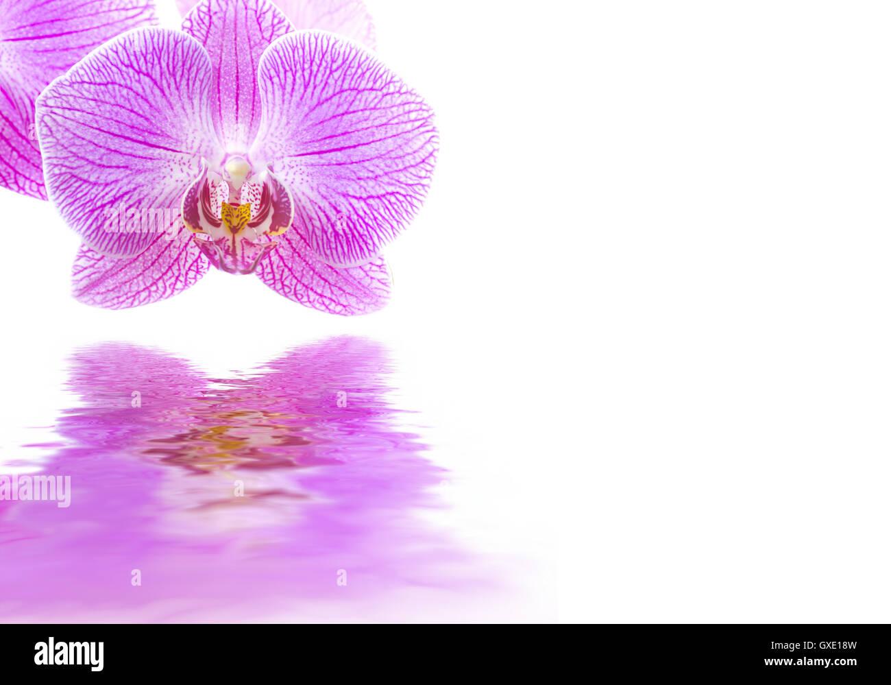 Floral abstrakten Hintergrund / Rahmen: Rosa Orchidee Blume isoliert ...